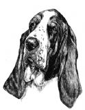12 Basset Hound Notelets with Envelopes